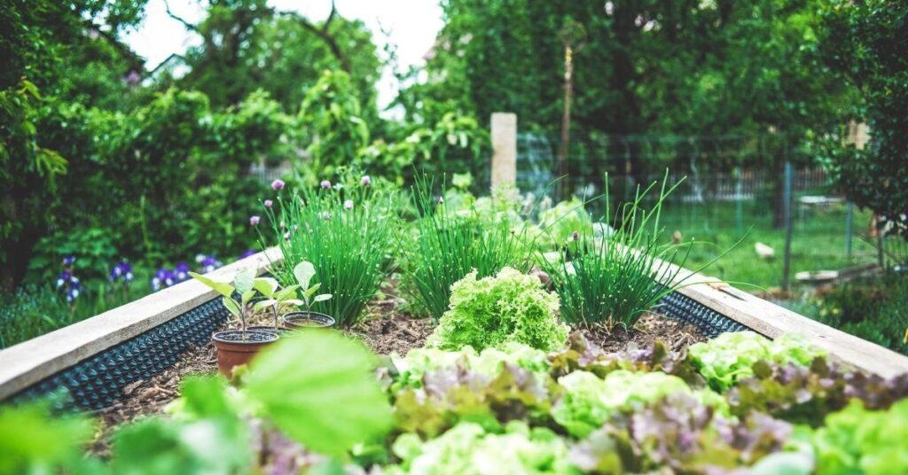 Raised bed planting